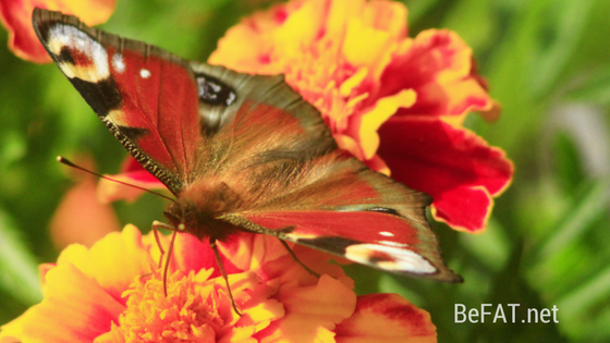 Butterfly image. Post: inspiration and motivation transformation personal growth self-love www.befat.net